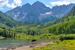 Moose at Maroon Lake - A young moose, with only one antler, walking and feeding in Maroon Lake at base of Maroon Bells on a sunny Summer evening. Aspen, Colorado, USA.