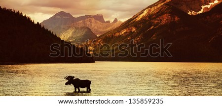 Moose in Lake with high mountains in background at sunset