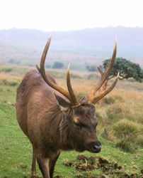 moose silhouette in Horton plains Sri Lanka