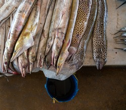 Moraenas on the table in Dar Es Salaam. Morey eel on slab at fish market, Tanzania