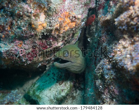 Moray eel in the sea of cortez #179484128