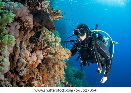 Shutterstock moray eel with scuba diver