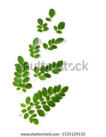 Moringa leaves have medicinal properties. top view