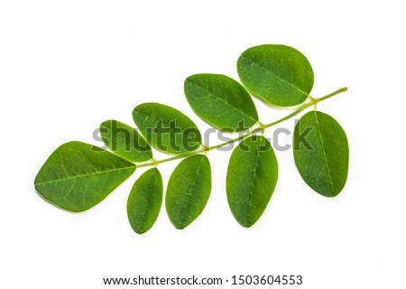 Moringa leaves on white background. Moringa Oleifera