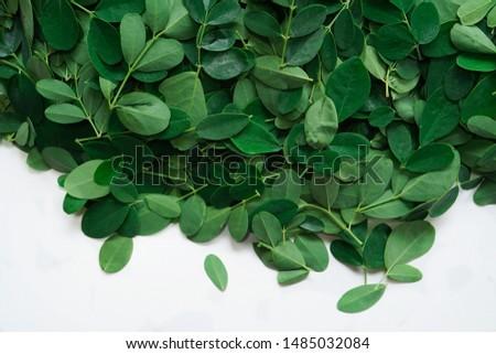 Moringa or Muringa leaves isolated on white, selective focus #1485032084