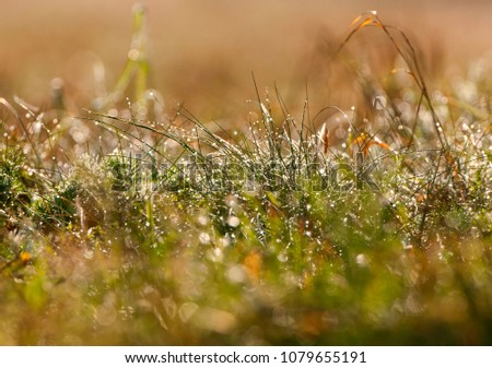 morning and dew in the grass #1079655191