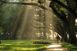 Morning at Cubbon Park, Bangalore, Karnataka, South India