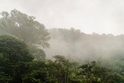 morning atmosphere in Indonesian tropical forest