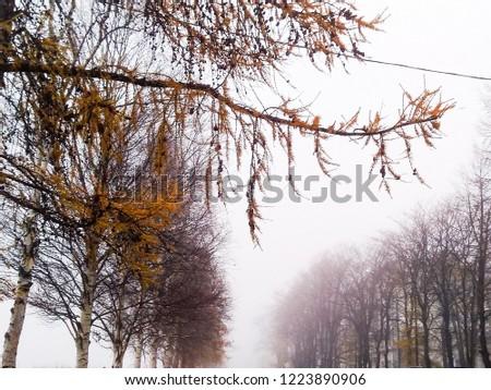 Morning autumn Park in the fog. autumn fog. Trees in fog. #1223890906
