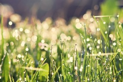 Morning dew.Dew drop on a blade of grass.