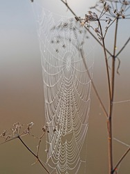 Morning dew on a spider web. Beautiful spider web with water drops close-up