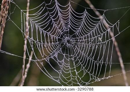 Morning dew on a spider web shows beautifully built web structure.