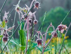 Morning dew on green grass and colorful flowers.