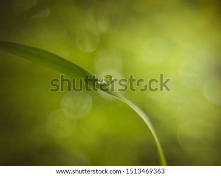 Morning dew on the green grass with a natural green background. Bokeh and blur background. Freshness and nature.