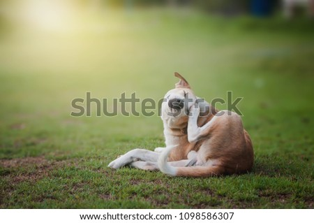 Morning Dog Scratches Morning #1098586307
