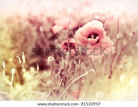 morning flowers meadow  ...