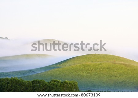 morning fog and sunlight in grassland