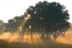 morning fog at dawn. sunrise. sun rays at dawn.