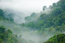 morning fog in dense tropical rainforest, kaeng krachan, thailand