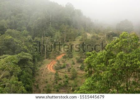 Morning fog in green tropical rainforest.