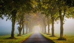 Morning fog in Hampshire UK