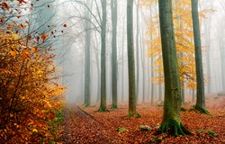 Morning fog in the autumn forest. Misty forest in autumn fog. Autumn misty forest in morning. Misty autumn forest