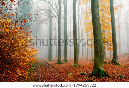 Morning fog in the autumn forest. Misty forest in autumn fog. Autumn misty forest in morning. Misty autumn forest Foto d'archivio ©