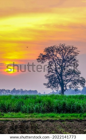 Morning fog in the field at dawn. Nature outdoors at dawn. Early morning fog at dawn