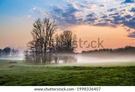 Morning fog in the field. Early mornin nature in fog. Foggy morning nature landscape. Early morning fog