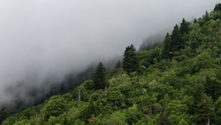 Morning Fog Shrouding the Trees in the Appalachian Mountains Viewed Along the Blue Ridge Parkway