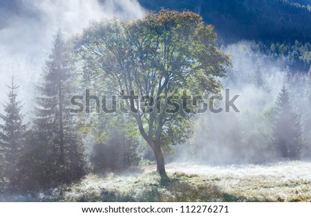 Morning foggy autumn mountain landscape with poplar seed tufts on grass .