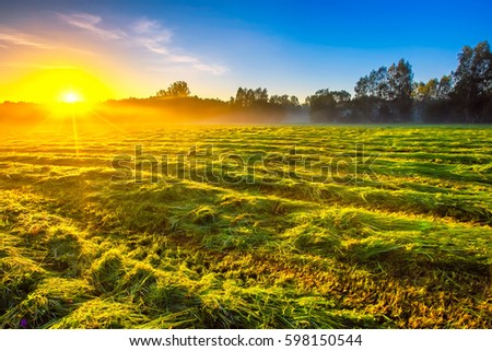 Morning foggy meadow landscape in polish countryside. Polish morning landscape.  #598150544