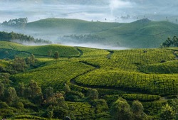 Morning foggy tea plantation in Munnar, Kerala, India. Mountain landscape panorama with mist in the valley.