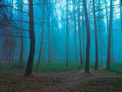 Morning forest with trail in summer in thick fog