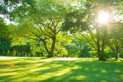 morning garden sunshine