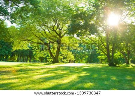 morning garden sunshine #1309730347