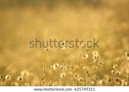 Morning grass #625749311