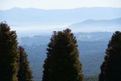 Morning haze and fog covering a valley with mountain sin the background and a group of pines in the foreground.