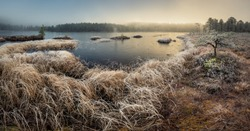 Morning hoar frost and ice on the grass and trees in Jonsvatnet area, Norway. Boreal swampy forest ground near Malvik.