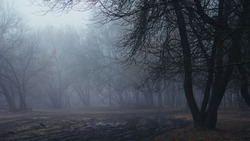 Morning in a dark rainy foggy scary forest