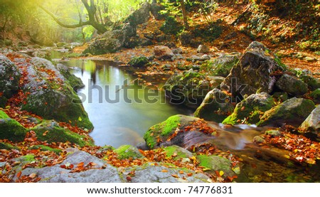 morning in autumn forest - stock photo