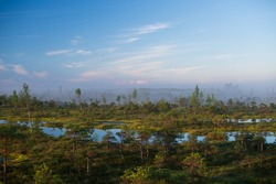 Morning in Great Kemeri bog. Bog in the foggy morning. Small ponds in bog. Reflections in the lake, bog in the morning. Misty evening, Latvian nature. Swamp background. Misty swamp.