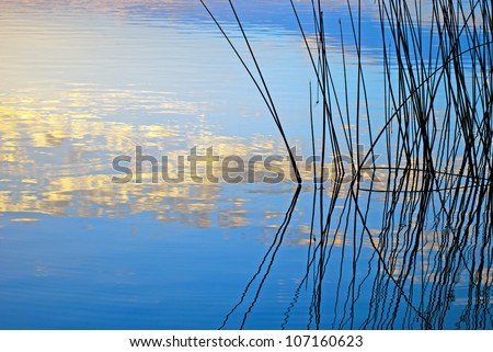Morning lake landscape with silhouette of reeds reflected in water