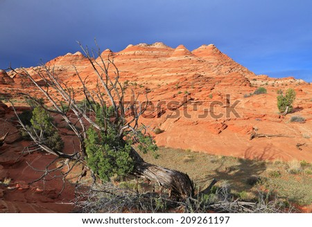 Morning landscape at Coyote Buttes, Utah, USA.
