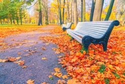 Morning landscape in autumn park. Orange red maple leaves on road. Yellow forest tree on background. Fall season nature scene beauty. Bench alley in city garden. Path in woods, scenery in sun street