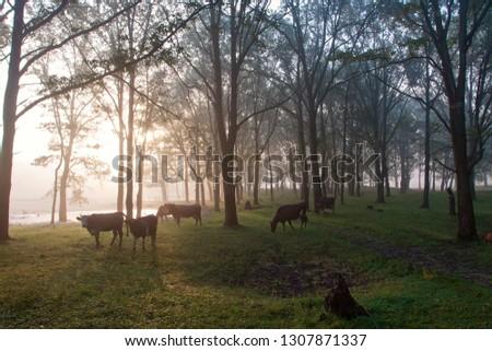 morning landscape morning light #1307871337