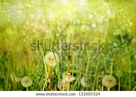 Morning landscape/Spring field with dandelions on bright sunny day/ Spring background