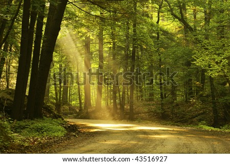 Morning light falls on a forest road