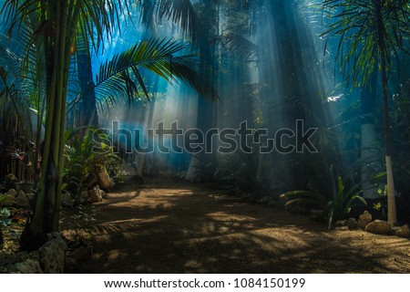 Morning light in a jungle garden