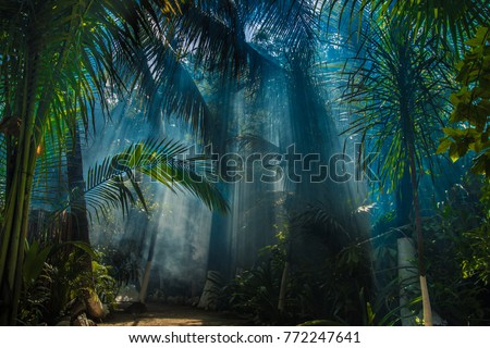 Morning light in beautiful jungle garden #772247641